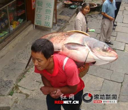 grote_vis_china_1