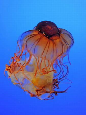 jellyfish_museum_nanjing_3