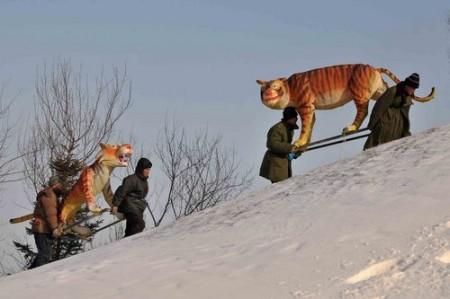 tijger_shenyang_3