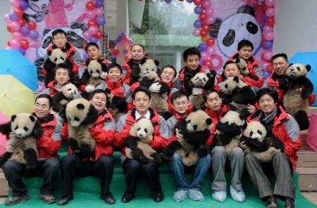 china_panda_1