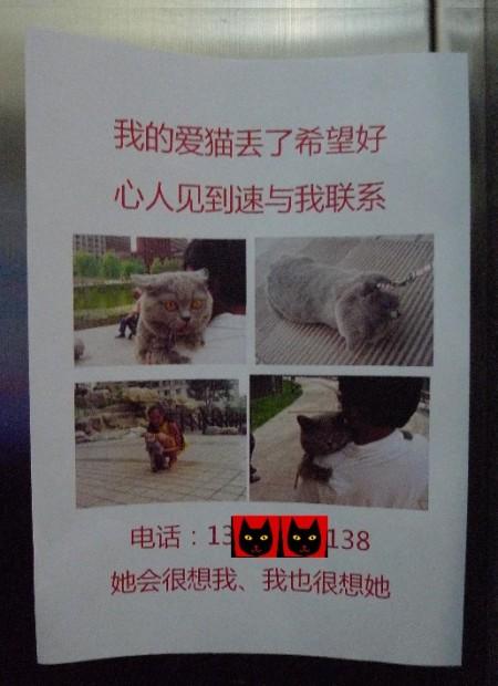 kat_kwijt_china_1