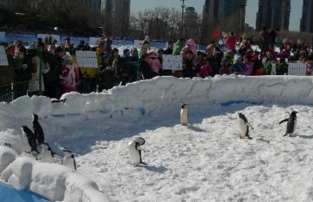 pinguin_park_beijing_9