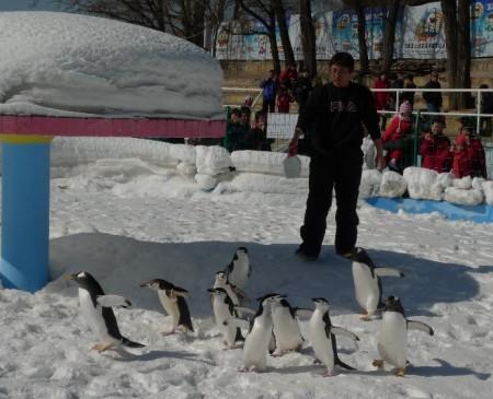 pinguin_park_beijing_92