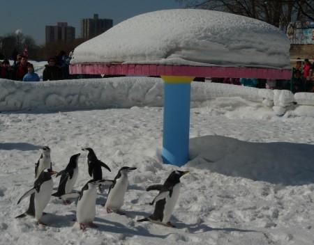 pinguin_park_beijing_93