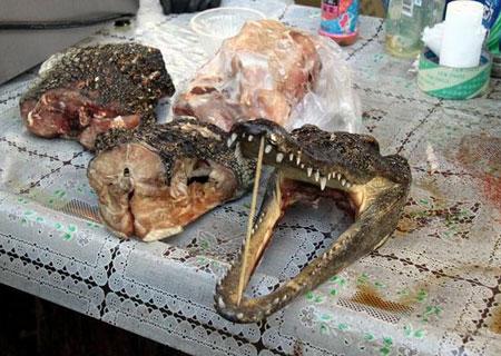 krokodil-china-1