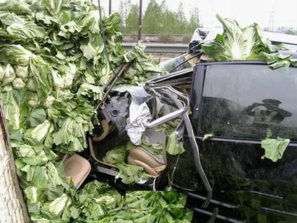 passat-cabbage-2a