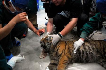 oogoperatie-tijger-china-2