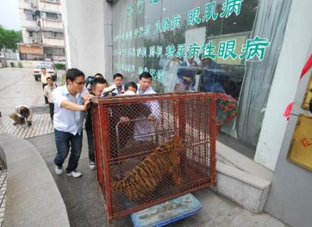 oogoperatie-tijger-china-5