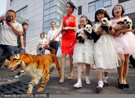 panda-honden-china-0