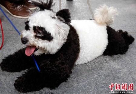 panda-honden-china-4