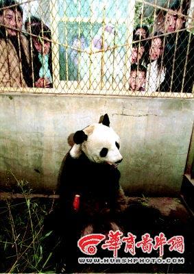 xian-qinling-wildlife-park-91
