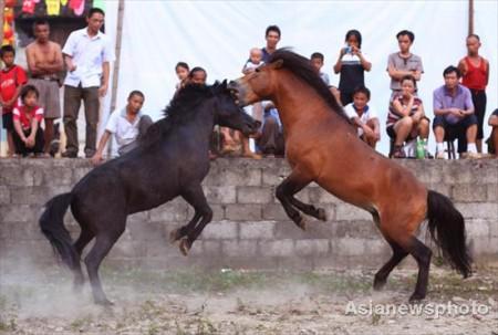 paarden-gevecht-china-2