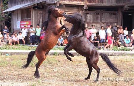 paarden-gevecht-china-3