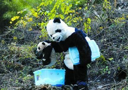 panda-centrum-1