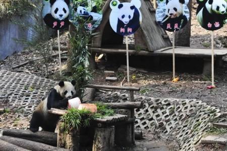 panda-paren-1