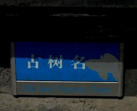 zhihua-tempel-beijing-95