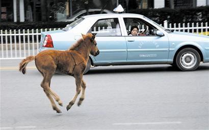 paard-ontsnapt-china-1