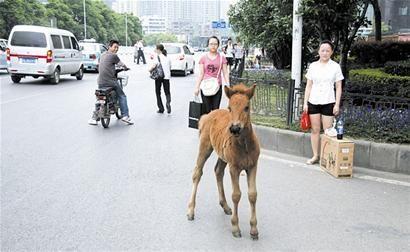 paard-ontsnapt-china-3