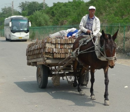 a-paard-beijing-3-1