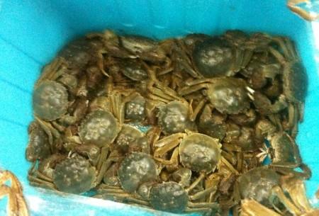krabben-suup-2